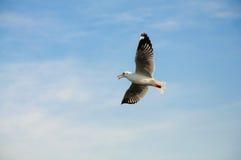 Seagull Στοκ Εικόνα