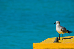 Seagull. Sitting on the yellow boat stock photography