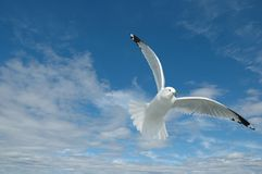 Seagull. Overlooking ocean with very nice cloudy sky  with seagull flying over Stock Photos
