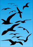 Seagull. Silhouette of flying seagull on blue sky Stock Photos