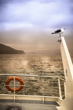 Seagull#1 Stockfoto