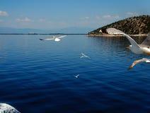 Seagull 2 στοκ φωτογραφίες με δικαίωμα ελεύθερης χρήσης