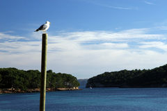 Seagull. On a post is watching a bay royalty free stock images