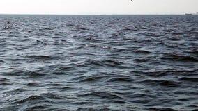 Seagull φιλμ μικρού μήκους