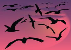 Seagull. Silhouette front of sky royalty free illustration