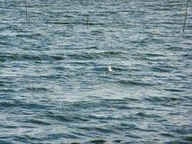 Seagull Στοκ εικόνα με δικαίωμα ελεύθερης χρήσης