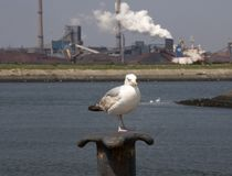 Seagull. With polution on the background Stock Photography