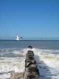 Seagull Στοκ εικόνες με δικαίωμα ελεύθερης χρήσης