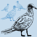 Seagull. Hand drawn image of a seagull stock illustration