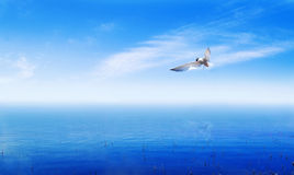 Seagull above abstract mist ocean Royalty Free Stock Image