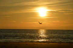 Seagull above beach in France Royalty Free Stock Photos