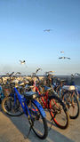 Seagull above Bicycle on jetty at Bang Pu Thailand Royalty Free Stock Photo