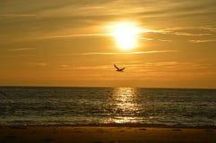 Seagull above plaża w Francja Zdjęcia Royalty Free