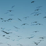 Seagull abstract Royalty Free Stock Image