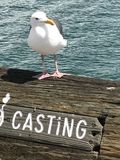 Seagull żadny molo Obrazy Stock