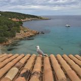 Seagull żadny strach Obraz Royalty Free