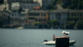 Seagull Against a Background Sea in Arona. Italy. August 2015. Seagull against a background sea in Arona. Italy. August 20, 2015 stock video footage