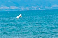 Seagull against blue sky Stock Photos