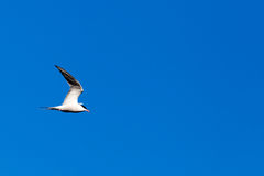 Seagull against the blue sky Stock Image