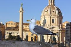 Seagull against the church Santa Maria di Loreto, Rome Stock Images