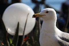 Seagull against a White Globe Royalty Free Stock Photos