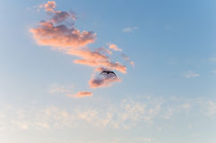 Seagull in the air Royalty Free Stock Photos