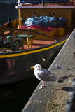 Seagull on Albert Dock in Liverpool Merseyside England Royalty Free Stock Photos