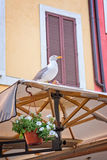 Seagull in an alley in Rome Italy Royalty Free Stock Photo