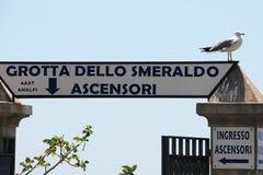 Grotto Smeraldo seagull. A seagull on the Amalfi coast near the entrance to Gratta Smeraldo Stock Photos