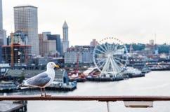 Seagull And Seattle Ferris Wheel Stock Photos