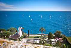 Seagull ang Azur blue sea. Azur coast. stock image