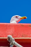 Seagull as a deck passanger on a ship to Athos, Chalkidiki Stock Photo