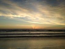 Seagull on Atlantic Ocean Beach during Dawn. Royalty Free Stock Image