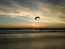 Seagull on Atlantic Ocean Beach during Dawn. Stock Image
