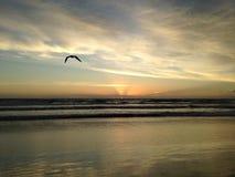 Seagull on Atlantic Ocean Beach during Dawn. Stock Photos