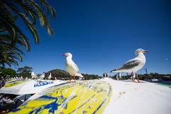 Seagull Australian Seafood Market Royalty Free Stock Photography