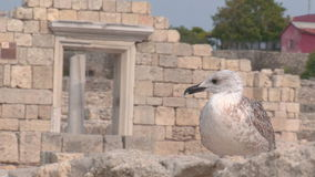Seagull on a background of ancient architecture stock footage
