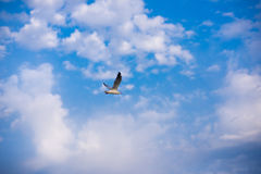 Seagull on a background of blue sky and clouds. Seagull flies against the blue sky with white clouds Stock Photos