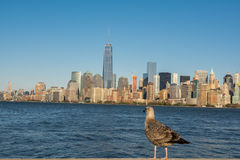 Seagull on the background of the city Stock Image