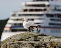 Seagull on background of large ship Stock Image