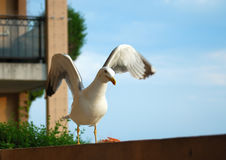 Seagull on the balcony Stock Photography