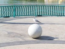 Seagull on Ball Stock Images