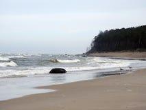 Seagull on Baltic sea coast, Lithuania Royalty Free Stock Photos