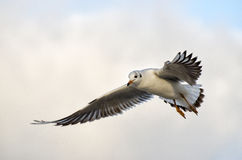 Seagull. At the Baltic Sea in Kolobrzeg, Poland Stock Images