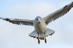Seagull. At the Baltic Sea in Kolobrzeg, Poland royalty free stock image