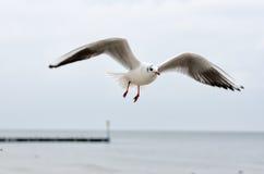 Seagull. At the Baltic Sea in Kolobrzeg, Poland stock photos