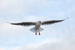 Seagull. At the Baltic Sea in Kolobrzeg, Poland stock image