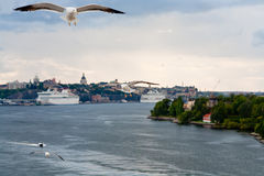Seagull on Baltic sea shore near Stockholm Royalty Free Stock Photography