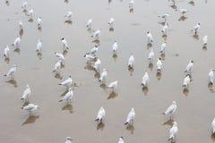 Seagull. At Bang Pu, Thailand Stock Photo