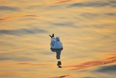 Seagull. At Bangphu viewpoint samutprakarnThailand royalty free stock photography